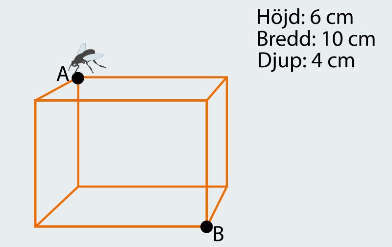 Hur lång är kortaste vägen för flugan?